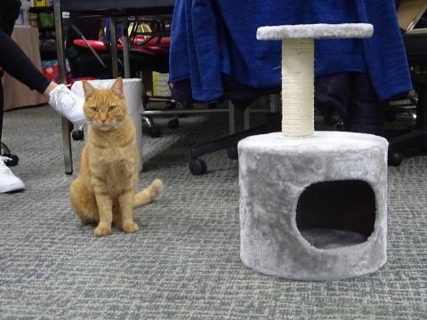 「如来くんの住み家を作ってみましたが。」⑩