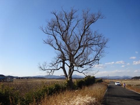 令和3年2月4日「木を切る事に、少し悩んでいます!」①