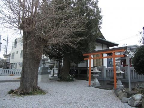 八王子神社のイチョウ