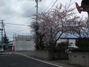 200424大野1