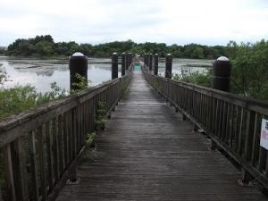 200618浮橋渡る