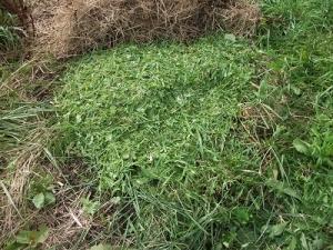 200822刈り草