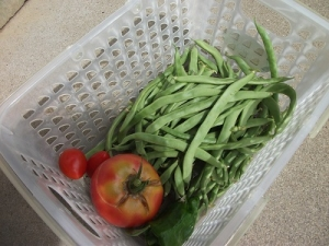 200822収穫
