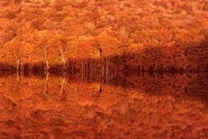 200928紅葉の蔦沼