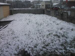 210409窓の外は雪