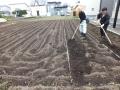 2020芋植え1