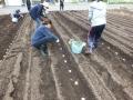 2020芋植え2