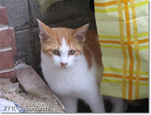 hachi200912_3