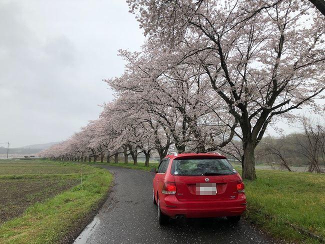 SakuraIMG_4708_R1.jpg