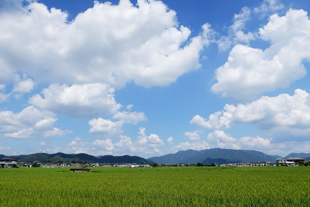 200828-松下うどんi-002-I