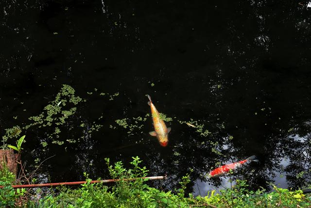 201106-池内うどん-012-S