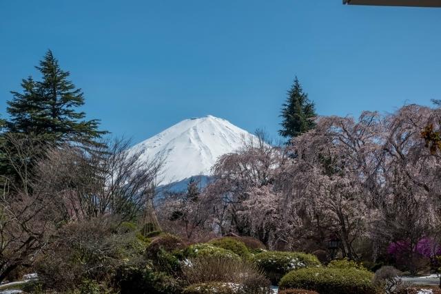富士とサクラ