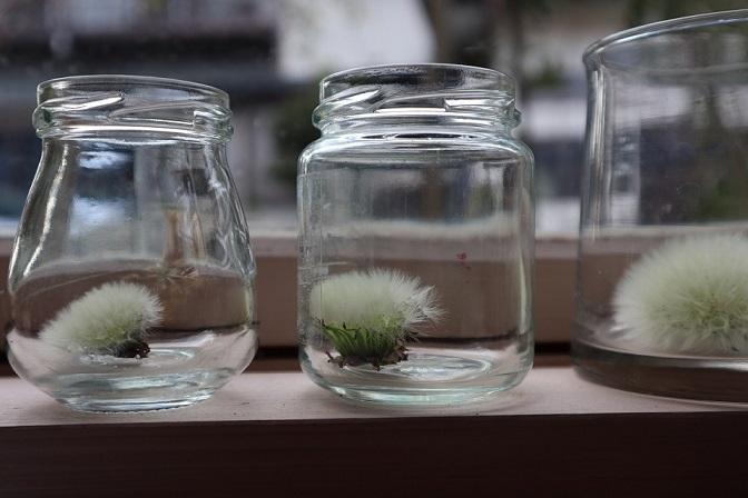 watageglass.jpg