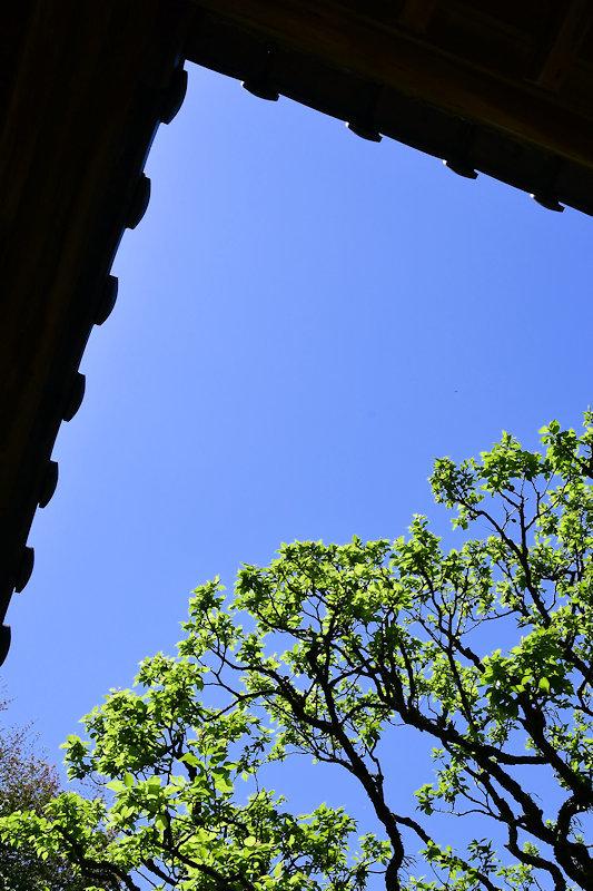 4676_青空と新緑
