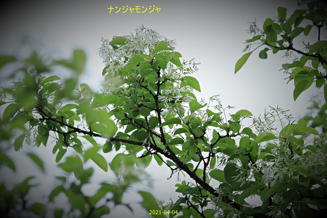 IMG_5189.jpg