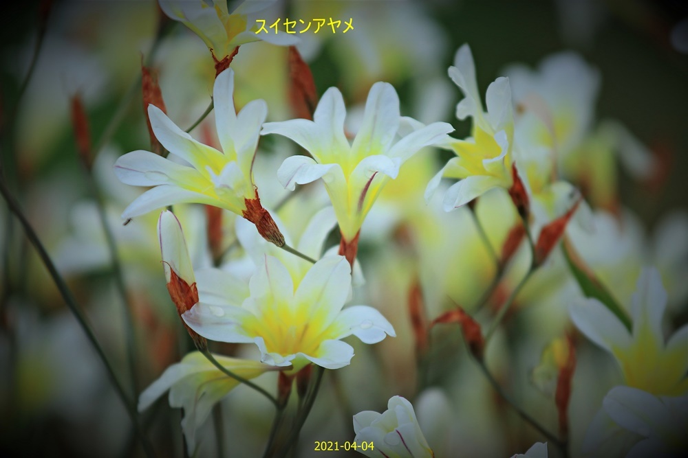 IMG_5268.jpg