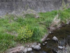 200411-4.jpg