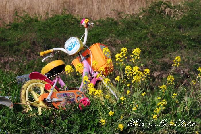 子供自転車 中山川河川敷 愛媛県西条市小松町新屋敷