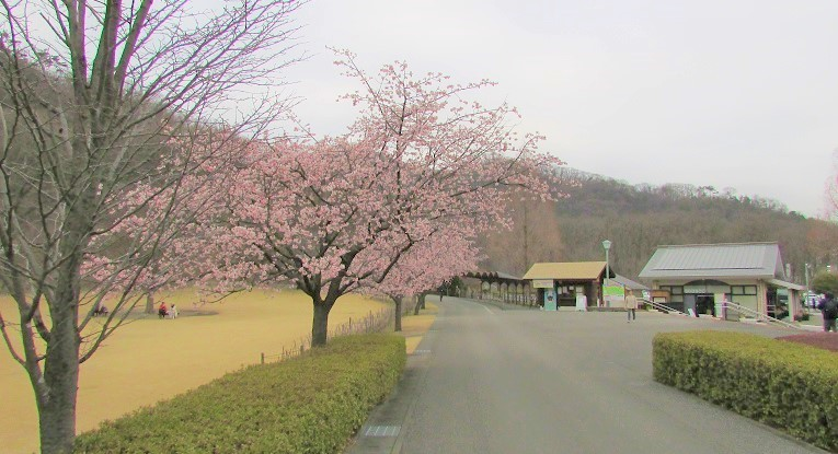 mikamo200307-143.jpg