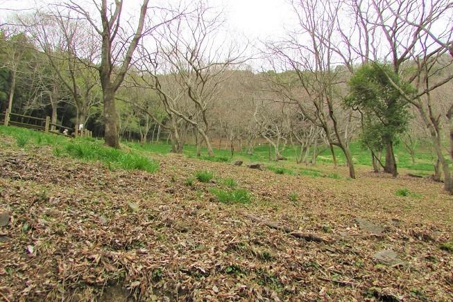 mikamo200307-151.jpg