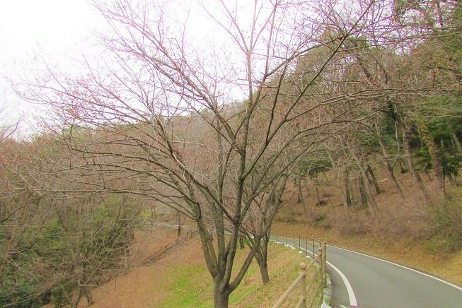 mikamo200307-157.jpg
