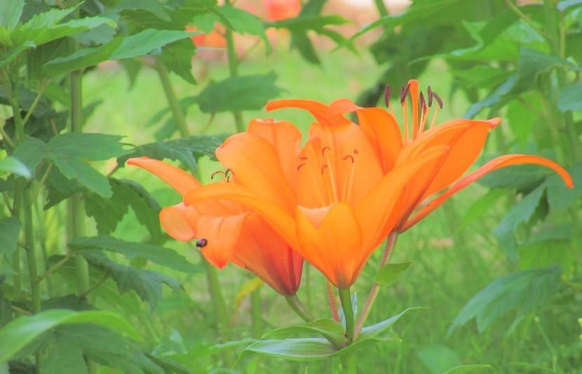 misato200607-111.jpg