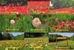 poppy2016-9001.jpg