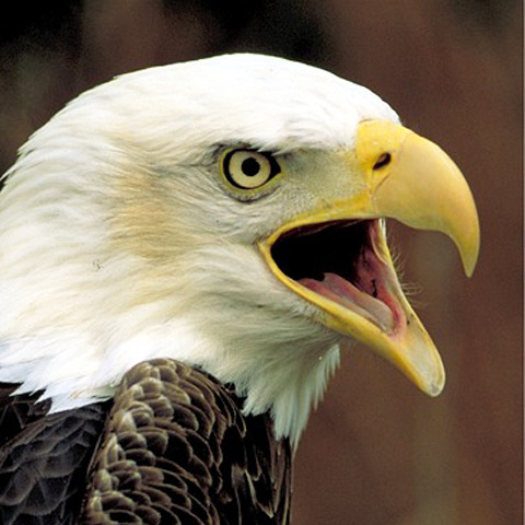 73-bird-lineicon.jpg