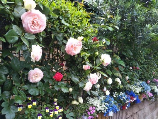 バラと花たち
