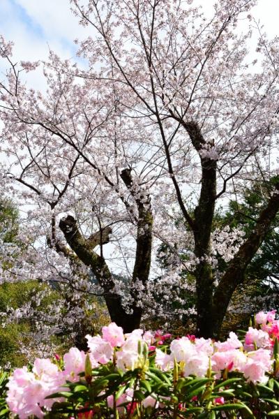 6丸山公園200329