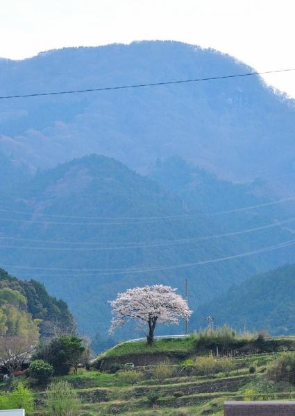 7皿ヶ嶺200403
