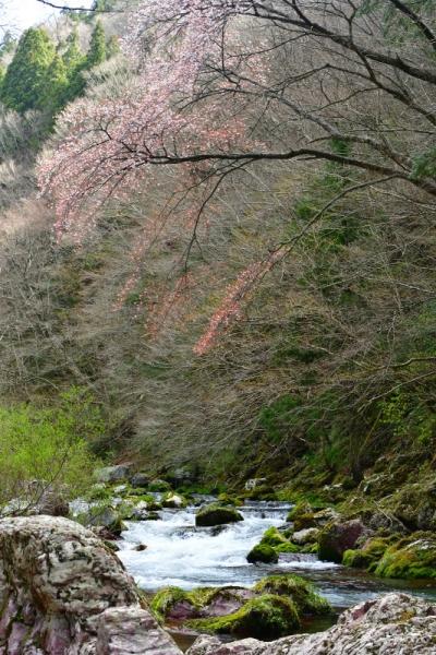 6小田深山200422