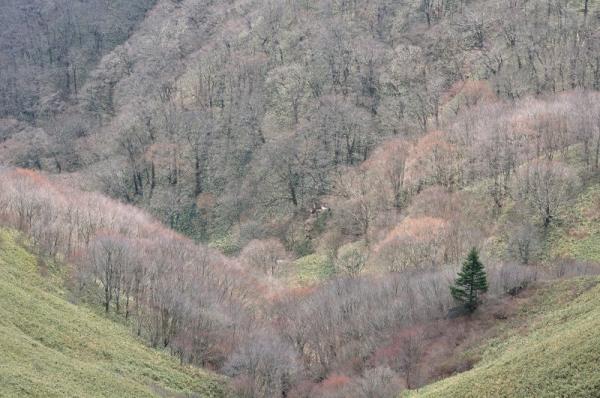6大川嶺200428