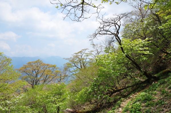 4手箱山200529