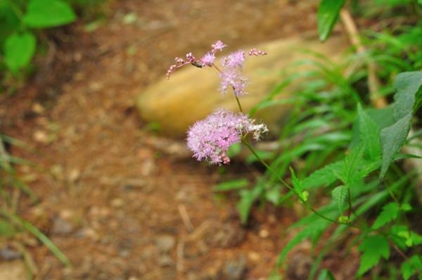 15東赤石山200802