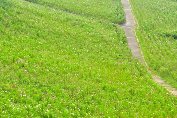 4翠波高原200822