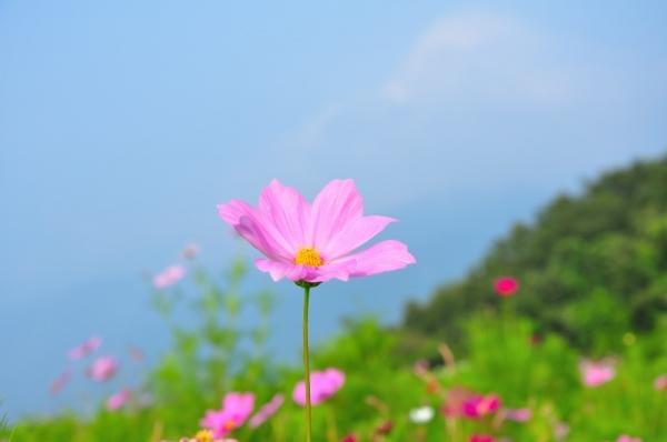 11翠波高原200822
