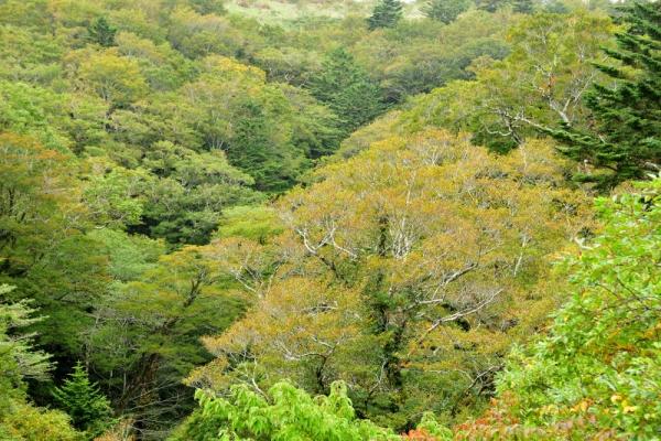 6笠取山201004