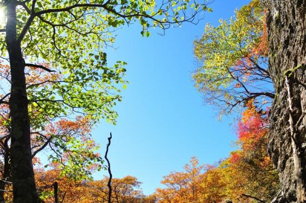 6もみじ谷201011
