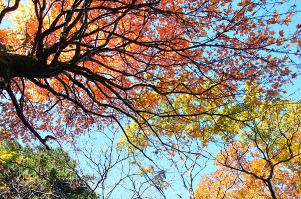 4もみじ谷201011