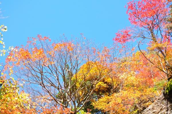 7もみじ谷201011