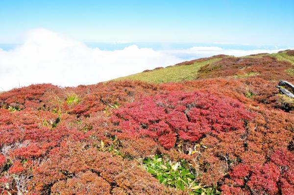 5笹ヶ峰201011