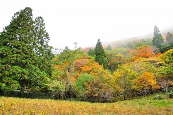 10笹ヶ峰201011