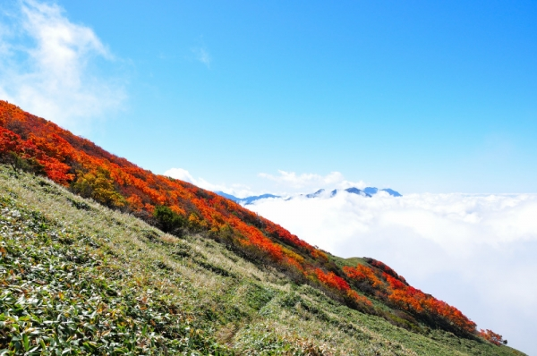 8笹ヶ峰201011