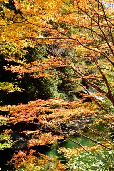 4小田深山201026