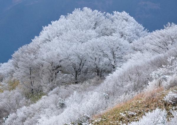13中津明神山201220