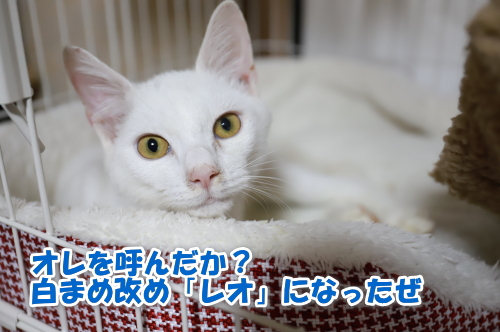 4_20201125192056e64.jpg