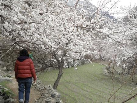 2011 anzu ohanami (18)