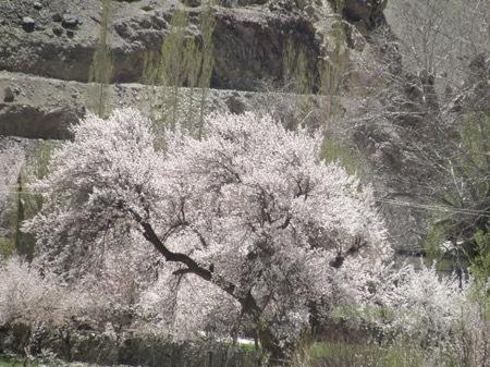 2011 anzu ohanami (44)