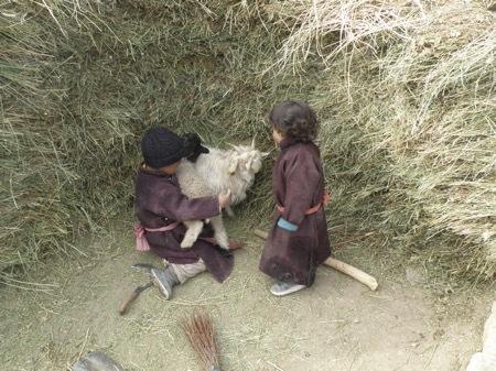 2012 Chaddar Zanskar (103)